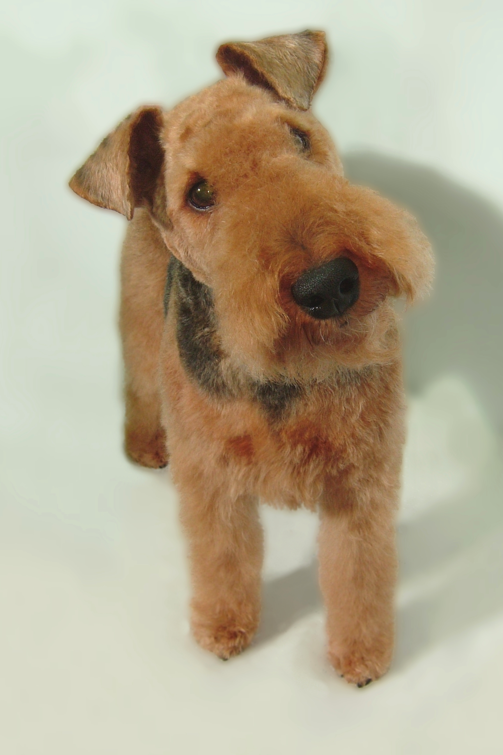 Welsh-Terrier-Breed-Clip