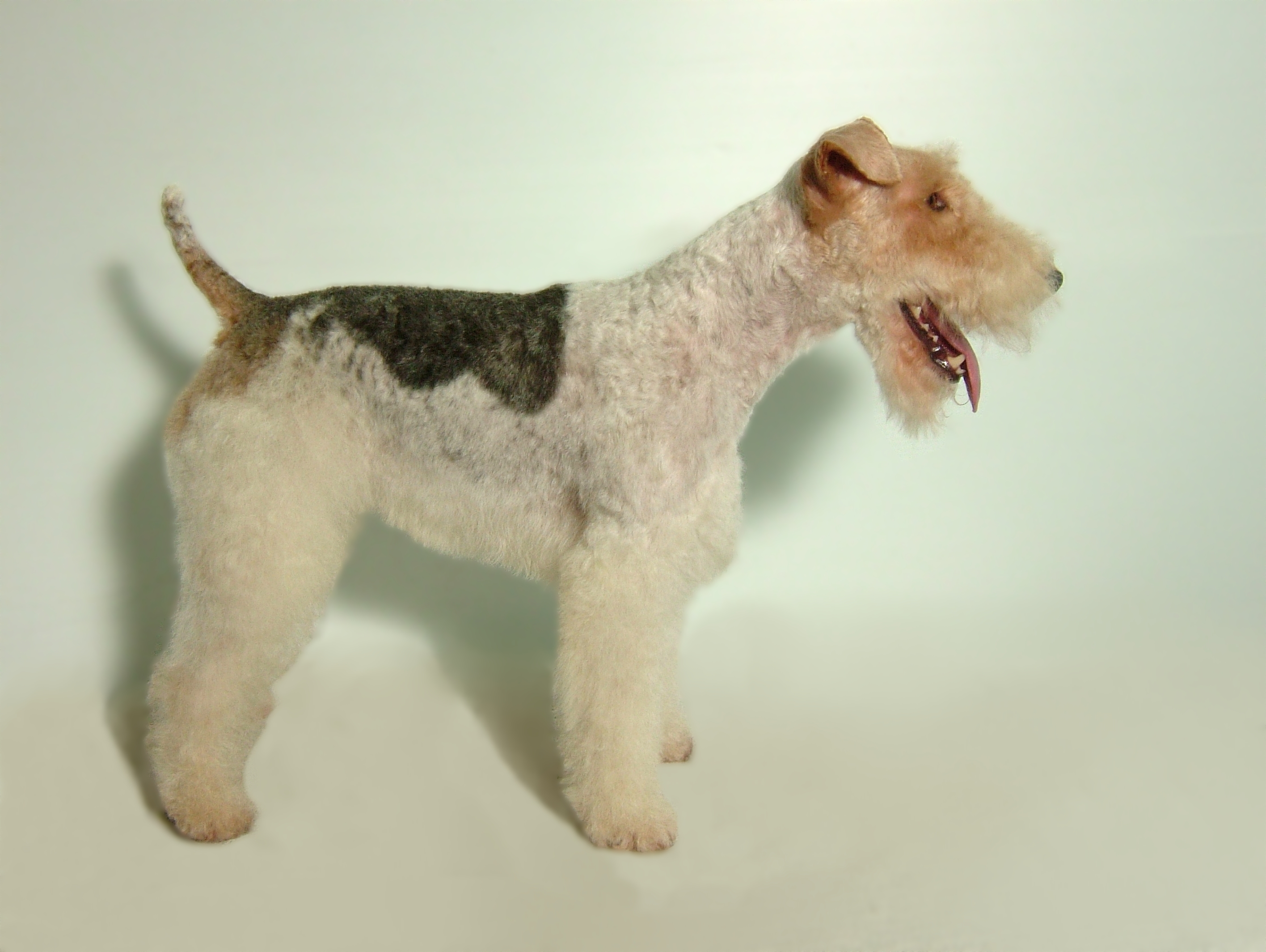 Wire-Fox-Terrier-Breed-Clip-2